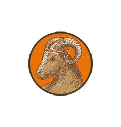 Ram Goat Head Circle Drawing vector image vector image