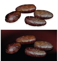 cacao beans on white and dark background vector image