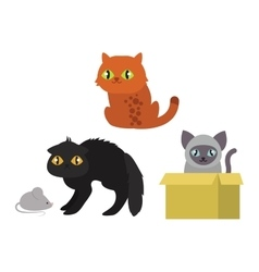 Cats kitty characters vector image