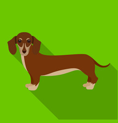 dachshund single icon in flat styledachshund vector image