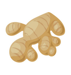 Ginger iconcartoon icon isolated on vector