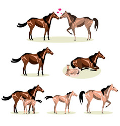 Horse life with all stages including birth mother vector