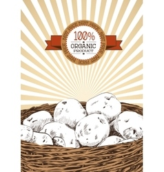 Potatoes sketch in a basket on white background vector