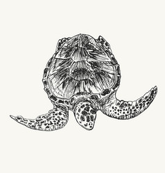 swimming turtle sketch vector image