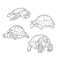 Turtle line art coloring book animal vector