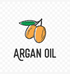 Argan oil fruit and leaf sketch icon vector