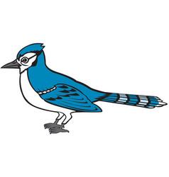 blue jay logo vector image
