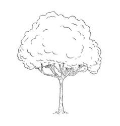 cartoon drawing of tree vector image