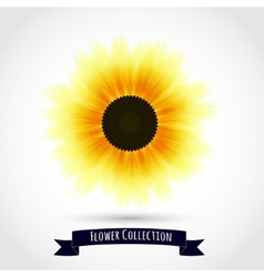 Colorful sunflower isolated on white vector image