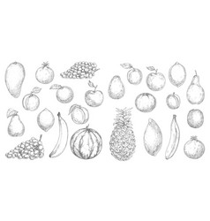 Tropical fruit and fresh berry isolated sketches vector