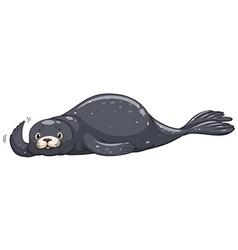 Seal with dark gray skin vector image vector image