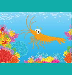 Shrimp walking on a reef vector