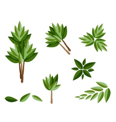 A Set of Isometric Evergreen Trees and Plants vector image