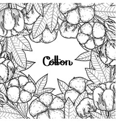 graphic cotton plants vector image