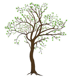 Isolated spring blooming tree vector