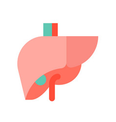 Liver medical and hospital related flat design vector