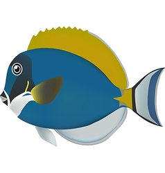 Powder blue surgeonfish vector image