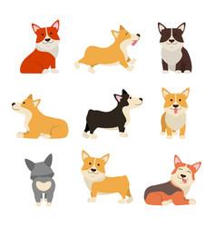cartoon color characters welsh corgi set vector image