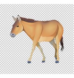 Donkey on transparent background vector