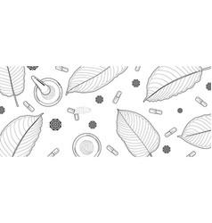 Mitragyna speciosa or kratom leaves sketch drawn vector