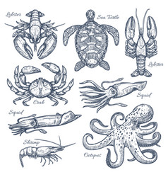 sea animals and seafood isolated sketch set vector image