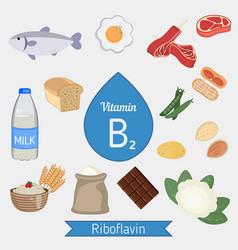 Vitamin b2 or riboflavin infographic vitamin b2 vector