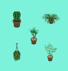 Isometric houseplant set of houseplant plant vector