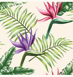multicolor tropical leaves flowers strelitzia vector image