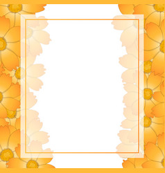 Orange yellow cosmos flower banner card border vector