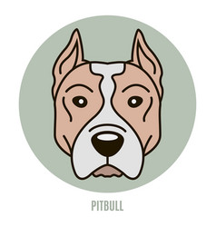 portrait of pitbull vector image