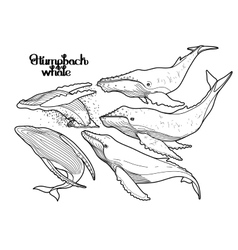 Graphic humpback whales vector image