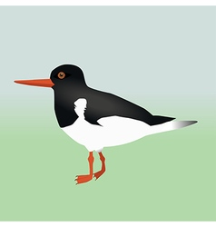 An oyster catcher vector image vector image