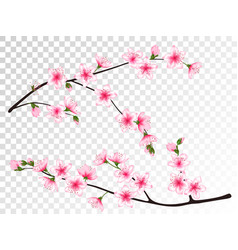 Apricot blossom branches set vector