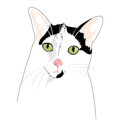 Cat Portrait vector