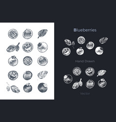 hand drawn blueberry icons organic food vector image