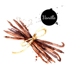 hand drawn sketch watercolor vanilla spice vector image