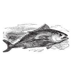 Northern bluefin tuna vintage vector