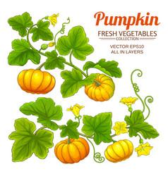 Pumpkin plant set on white background vector