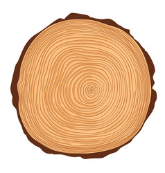 saw crosscut tree trunk vector image