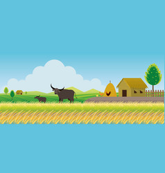 Thailand rice or paddy field background vector