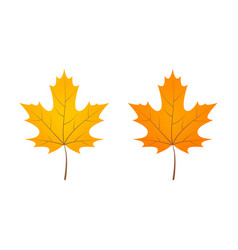 yellow orange autumn leaves vector image