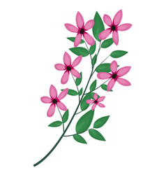 cosmos branch leaves image vector image