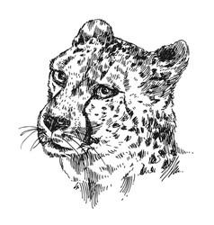 hand-drawn cheetah vector image vector image