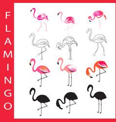 flamingo birds set cartoon outline and vector image