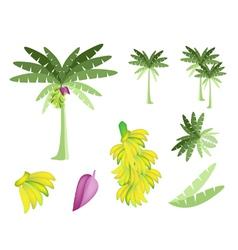 Set of Banana Tree with Bananas and Blossom vector image vector image