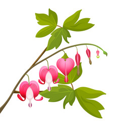 bleeding heart flowers isolated realistic vector image