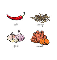 chili pepper garlic turmeric and caraway seeds vector image
