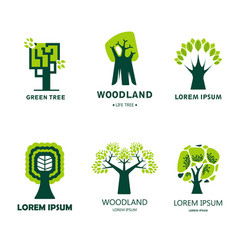 forest or woodland isolated icon tree ecology and vector image