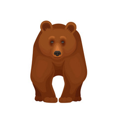 Large forest bear standing on four paws front vector