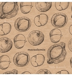 Seamless pattern with macadamia on a vintage vector image